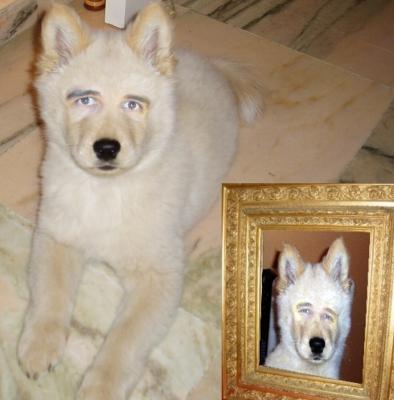 El perro del Gallardo